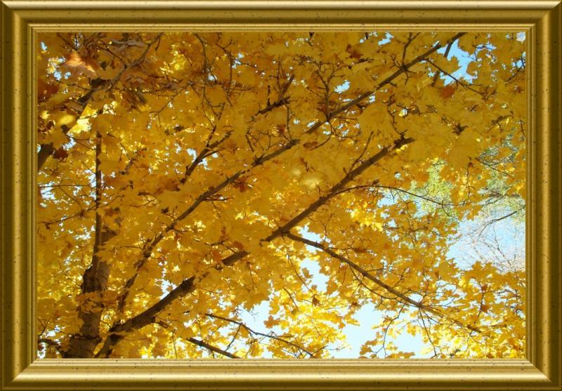 Maple Fall Foliage in Ross Park Pocatello Idaho DSCF0738.jpg