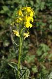 Gelbe Blumen M u Wfest Inkom DSC_5179.JPG
