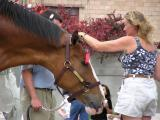 Clydesdale P6220059.JPG