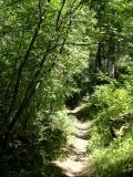 Crestline Trail Scout Mountain DSCN6621.JPG
