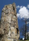 Petrified Tree Yellowstone _DSF0134.jpg