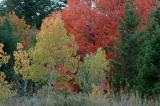 Buckskin Autumn Scene DSC_6716.JPG
