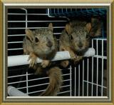 little squirrels - Aspen and Maple - smallfile DSC_6800.jpg