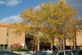 Autumn at ISU Eli Oboler Library and R5 Parking Lot DSCF0548.jpg