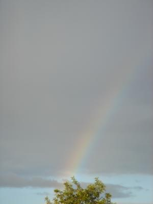 Rainbow - taken from the window of my house