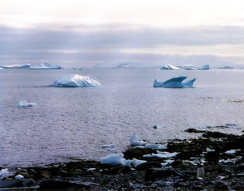 sea and icebergs