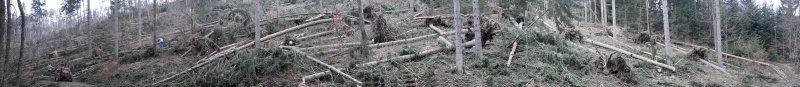 26. Jänner 2008: Sturm Paula legt mehr als 6 Millionen Festmeter Holz um