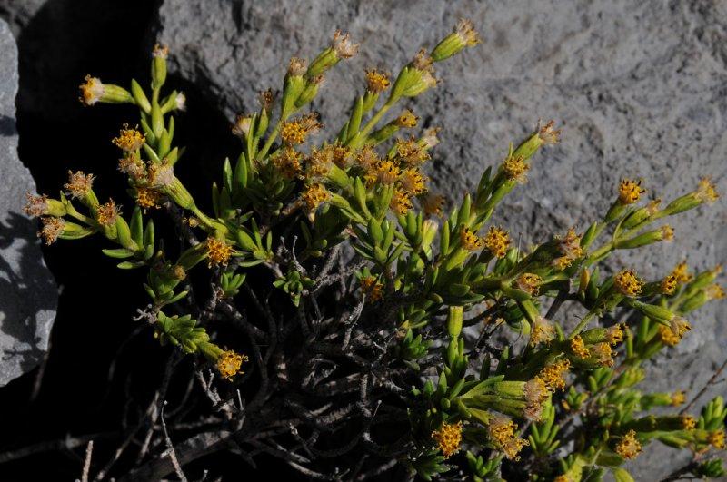 Naenae Flowers