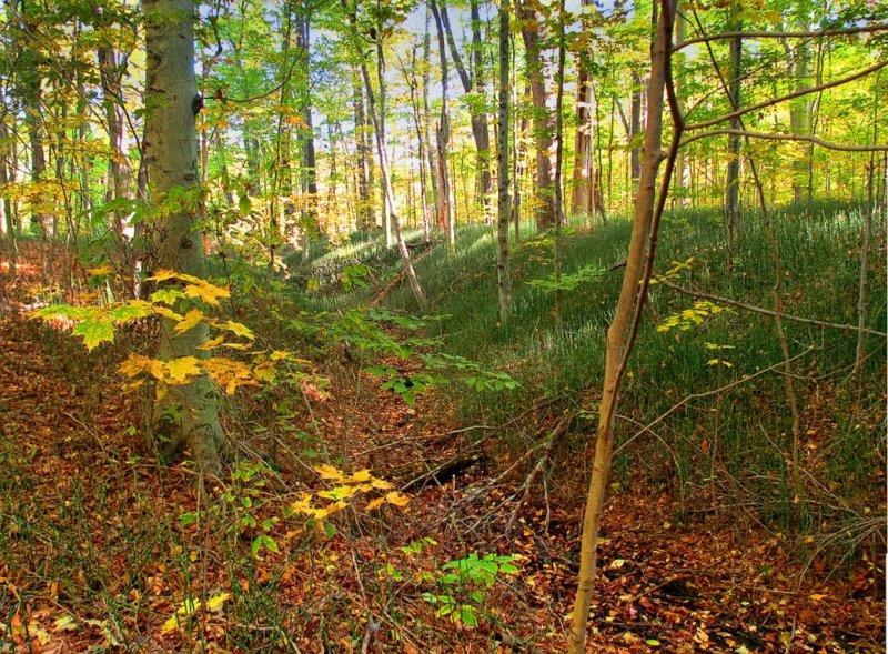 Springwater Conservation Forest