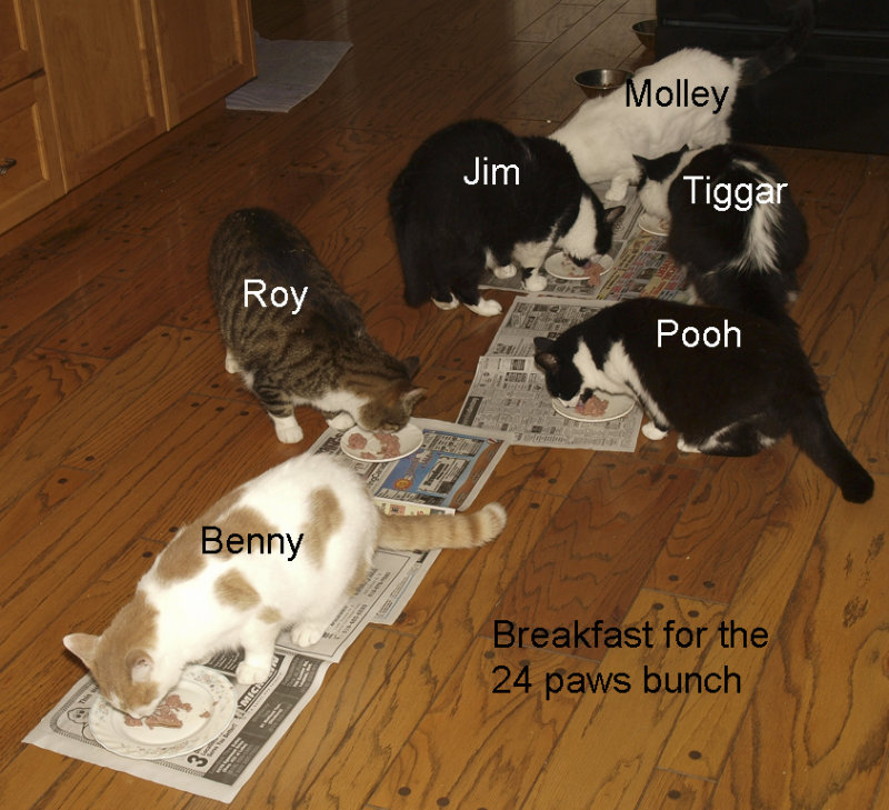The 24 paws gang