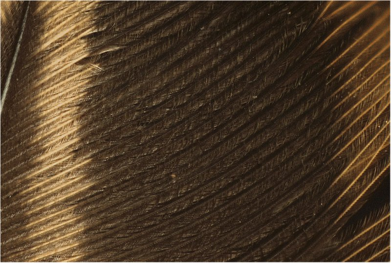 feather detail.jpg