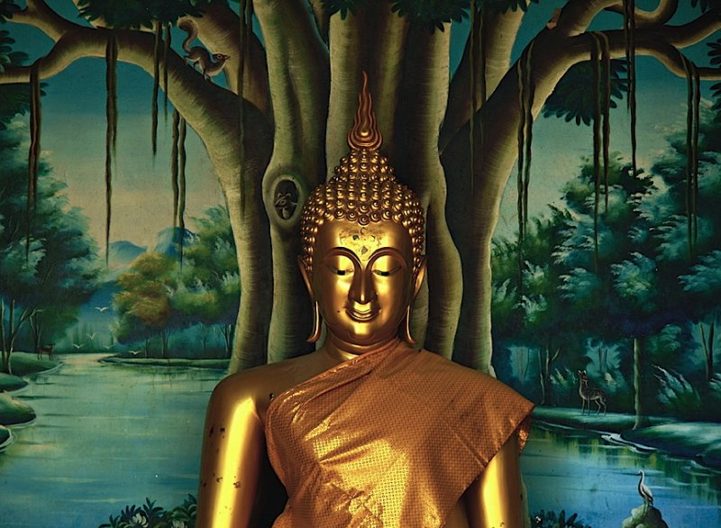 Buddha image with forest background