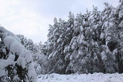 Rothiemurchus forest path