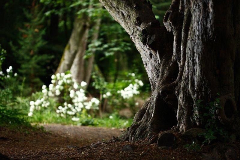 20100706 - Tree on Henrys Island