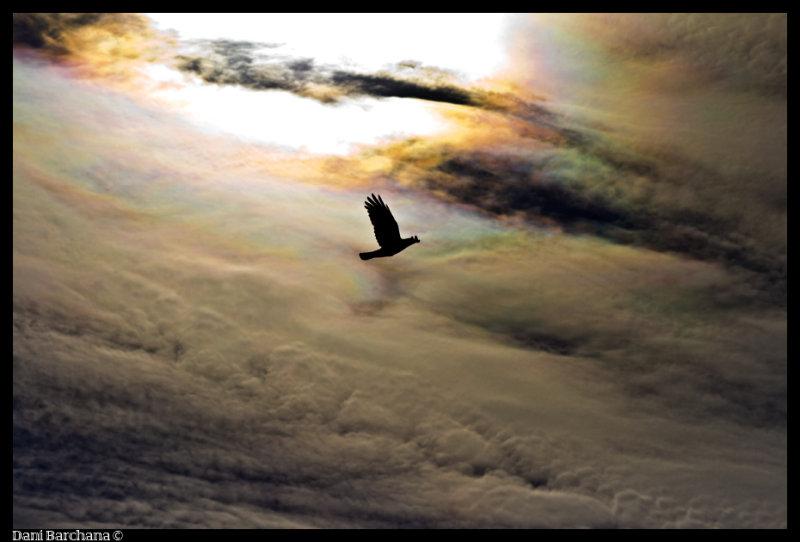 crow against a stormy skies