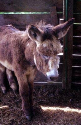 398_donkey.JPG