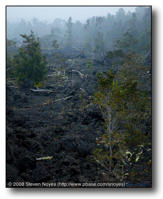 Devastation : Kilauea : Hawaii