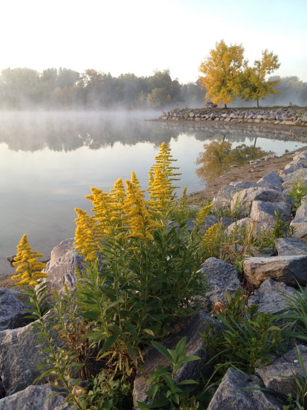 Baumann Lake mist