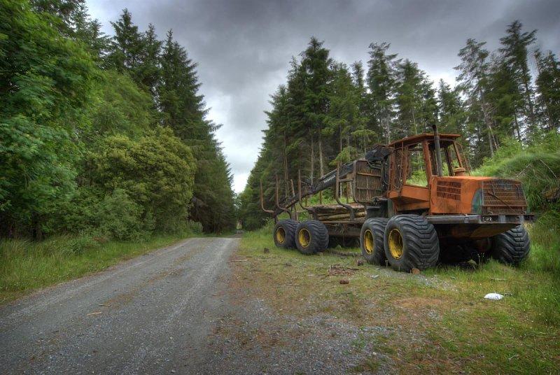 Cloonnacartan Forest