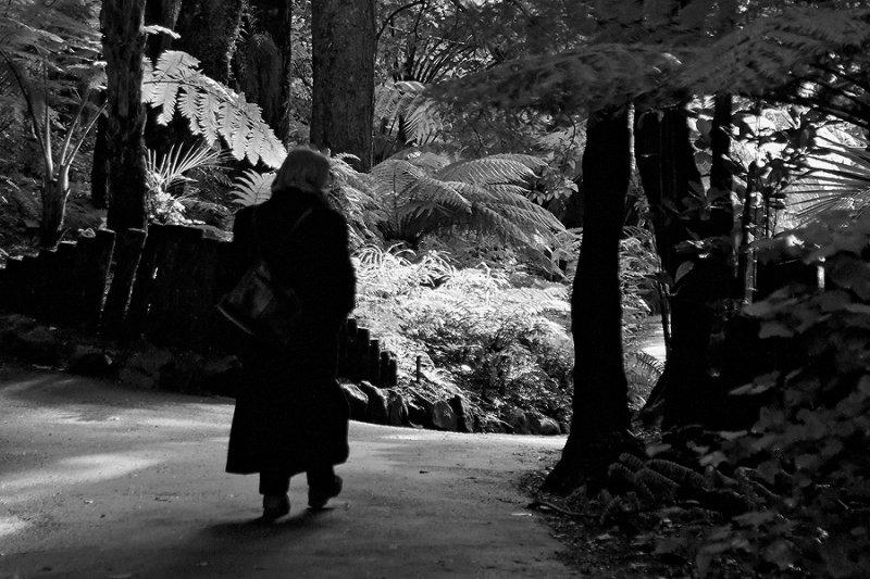 wintery walks in the gardens