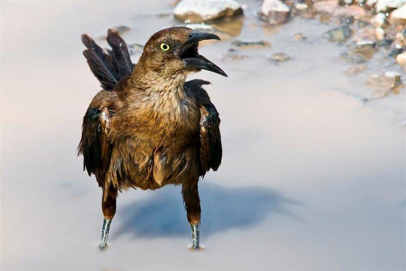 Nevada desert  bird