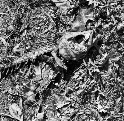 Dead fish, Indiana, 2009.jpg