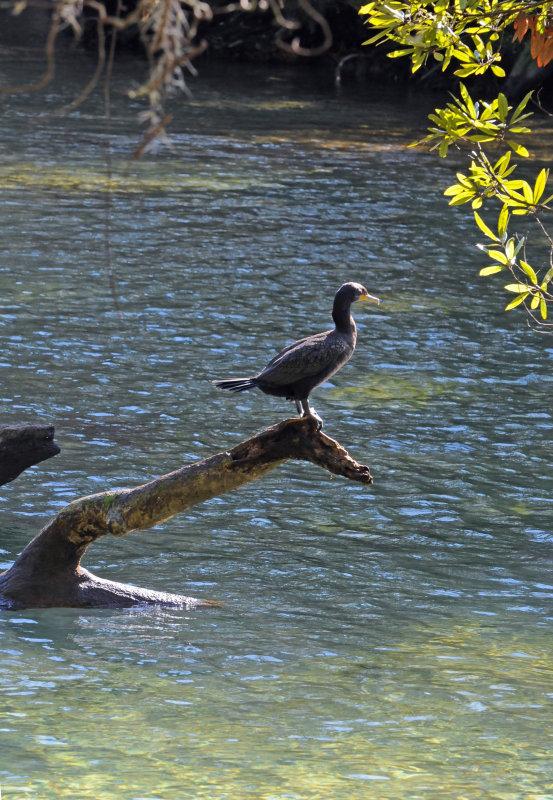 Cormorant - Wildlife State Park