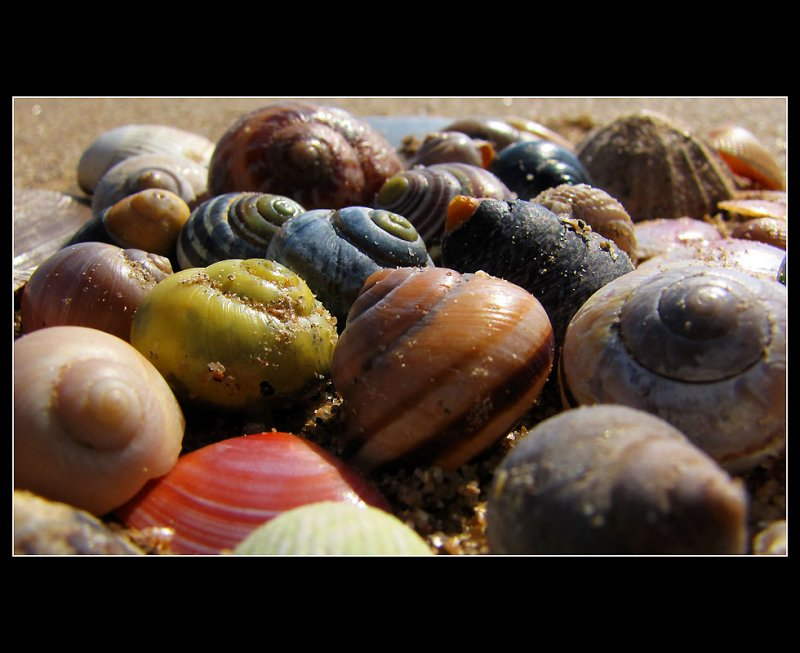 ... Playing with the snails ...