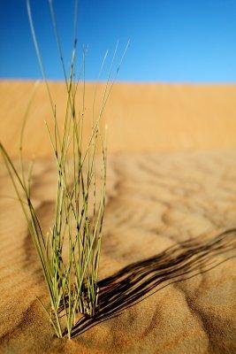 New life in the desert