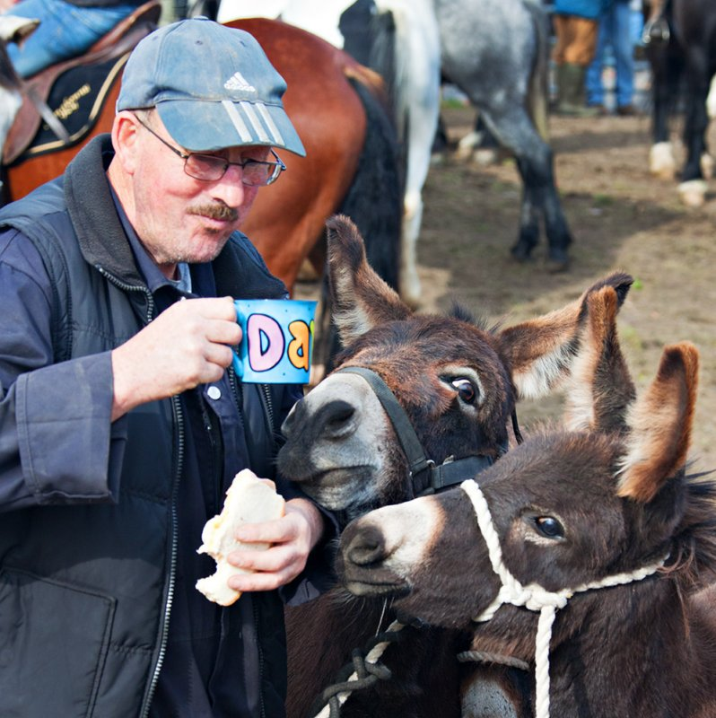 Dining with Donkeys