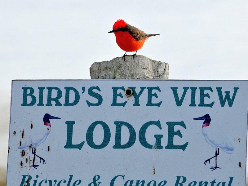 Birds Eye View Sign
