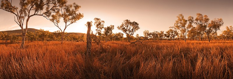 Sea of Spinifex grass against the light