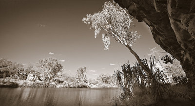 Manning Gorge and gum tree duotone