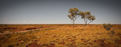 Great Northern Highway Gum Trees