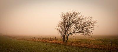 Tree in the Winter Mist