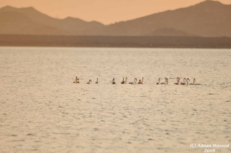 Buhairat_ul_Musk_Birds_021.jpg