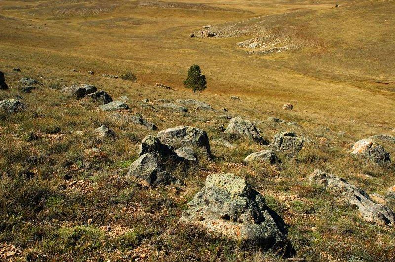 North Kaibab Meadow