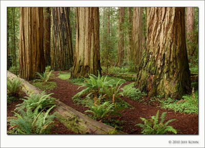 Redwood National Park Image Gallery