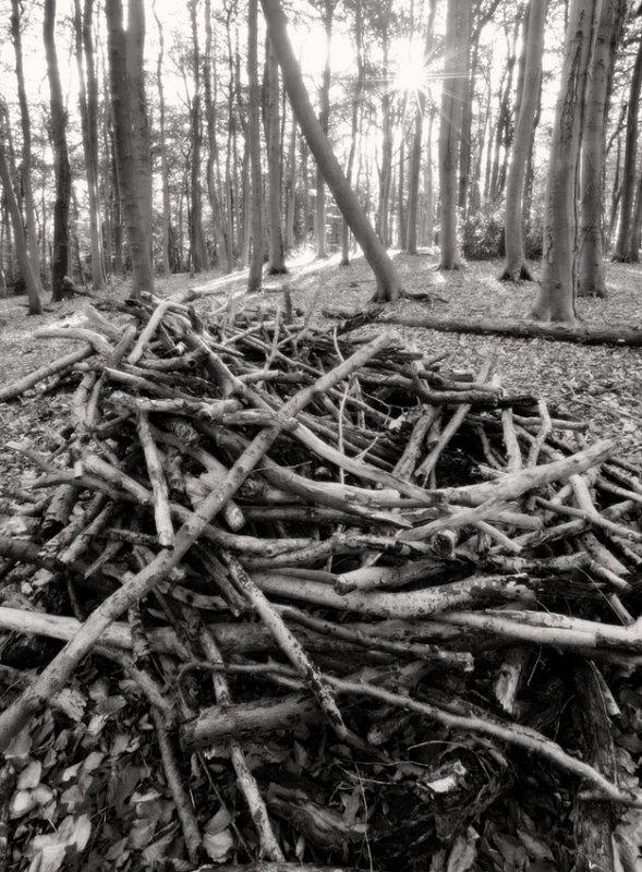 Beechwoods at Randwick