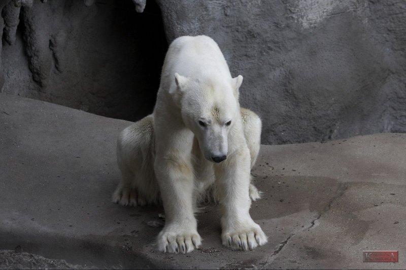 Polar Bear_5832.jpg