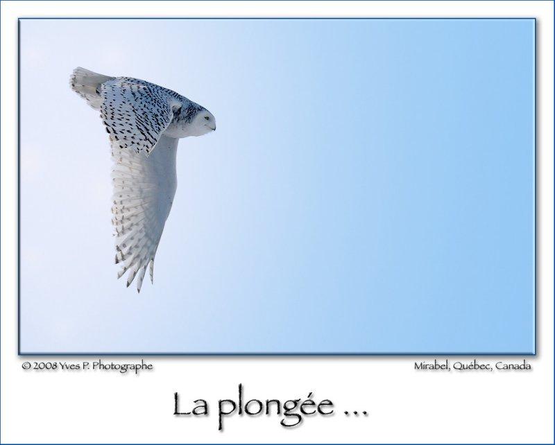 The Plunge ... (Feb 2008)