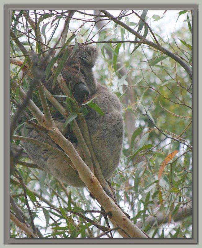 Asleep in the treetops
