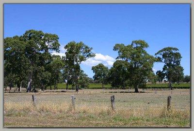 Baker's Gully farm - 2