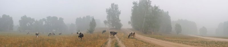 Moscow region. August 2010. Cows and the smoke of forest fires