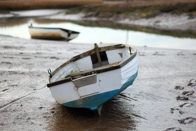 Mud Skipper