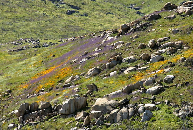 Hills of color now where flames raced through