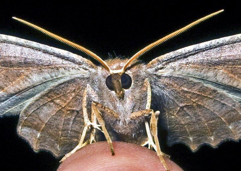 Moth 09 - 2