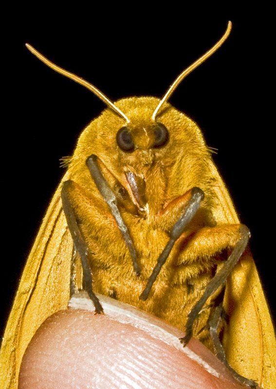 Moth 09 - 20