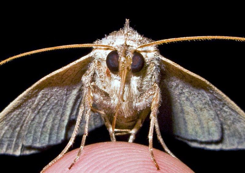 Moth 09 - 31