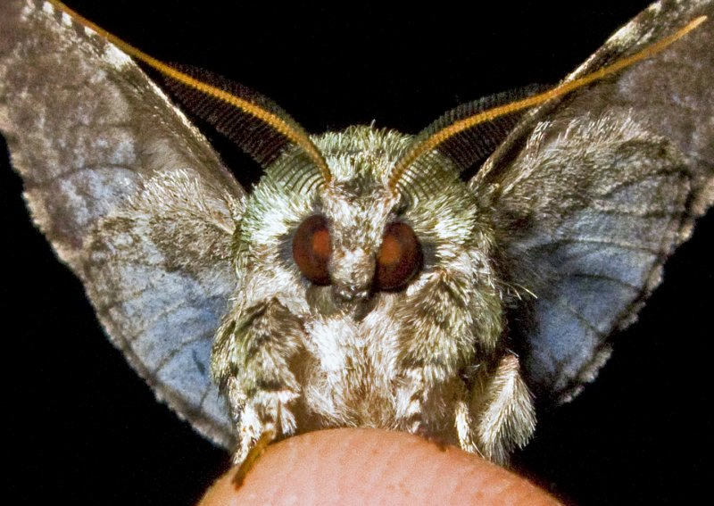 Moth 09 - 23